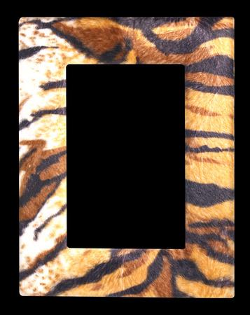 fur: Wildlife fur tiger photo frame isolated on black background