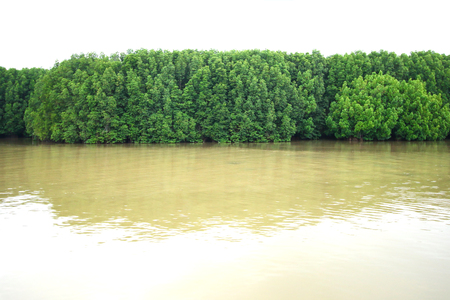 Tangle of Mangrove tree and branches growing in to a calm mangrove river