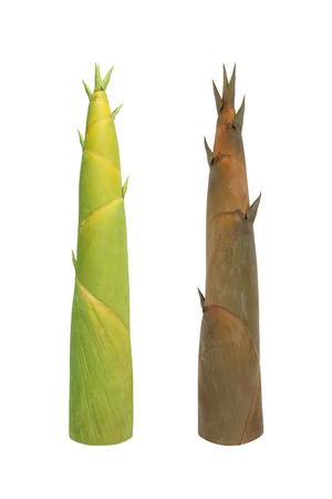 Two Shoot of Bamboo isolated on white background with clipping path