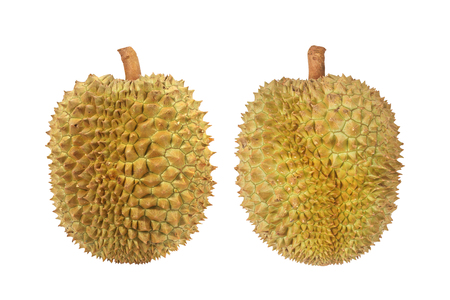 Two Durian isolated on white background with clipping path