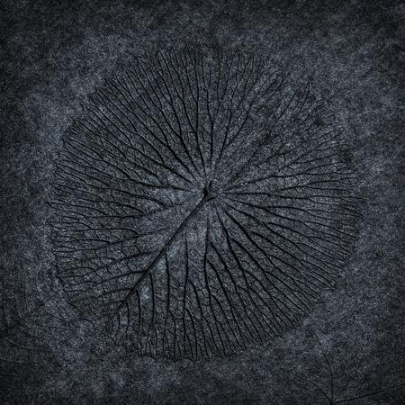 leaf print or stamp of leaf  on black stone texture background