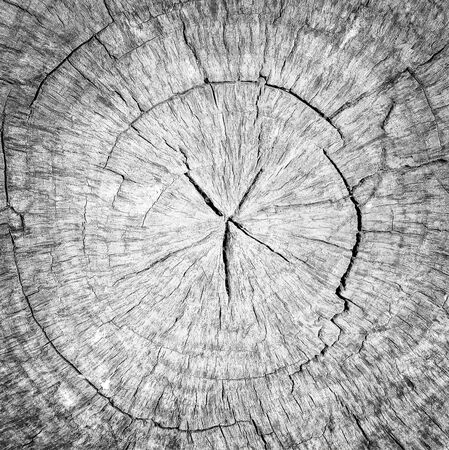 Round cut down tree with annual rings, Old gray Wood texture abstract background