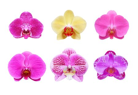 orchid collection species isolated on white background Standard-Bild