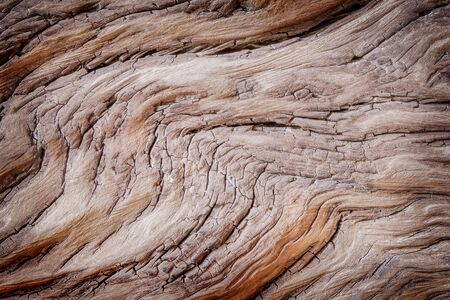 Wood texture, beach dead wood showing cracked pattern abstract background