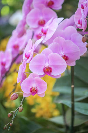 Close Up Of A Blooming purple Orchid Flower On nature blur Background