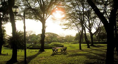 caes: Conjunto de mesa de madera bajo el árbol grande. El sol de la tarde brilla, tan hermoso, nos recuerda al que amamos al que espera. Foto de archivo