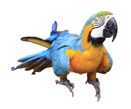 Colorful blue parrot macaw in zoo photo