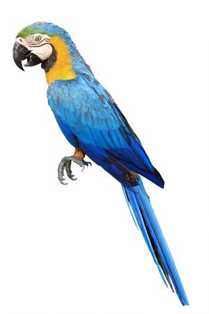 pappagallo: Colorful macaw pappagallo blu in zoo Archivio Fotografico