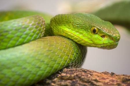 scrunch: Single colorful scrunch green young snake Stock Photo