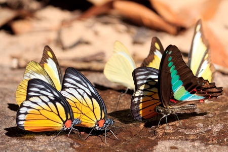Beauty and colorful butterfly Stock Photo - 11782581