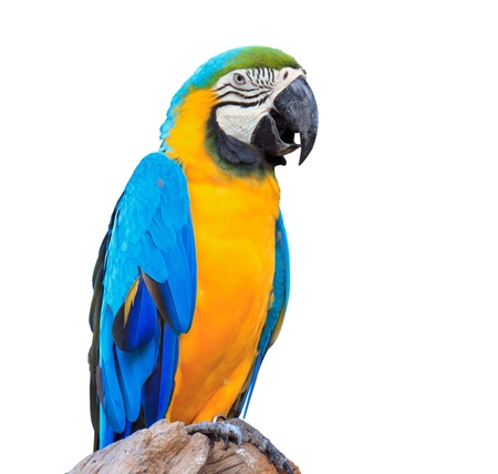 colorful parrot macaw on white background Imagens