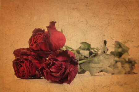 Red rose on old brown grunge paper background  photo