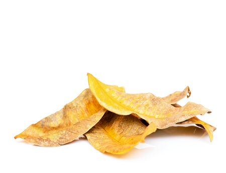 decay: Golden autumn decay leaf