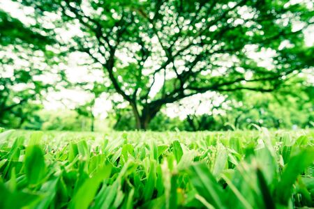 grass: Green grass and blur big tree Stock Photo