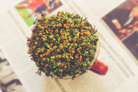 news paper: orange flower in cup on news paper background decoration Stock Photo
