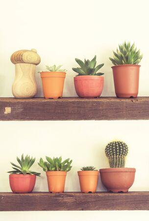 assort: assort cactus on wooden shelf