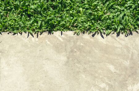 walk path: Top view contrast cement walk path and grass land background texture