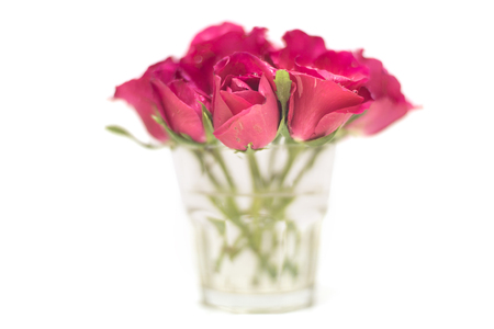 Pink rose flower in glass isolated on white background