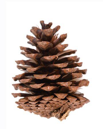 pinecone isolated on white background Imagens