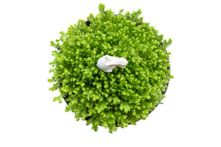 Top view plant bucket table decoration isolated on white background