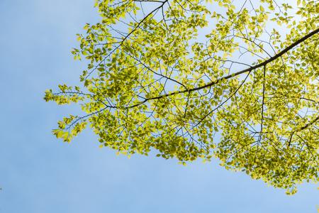 Tree branch leaf on blue sky background Imagens