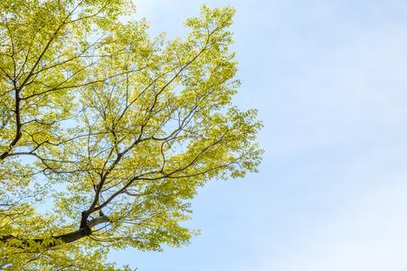 Tree branch leaf on blue sky background Imagens - 100371578