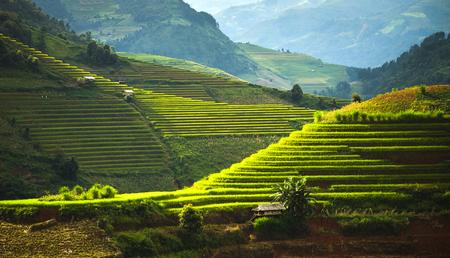 Werelderfgoed Ifugao rijstterrassen