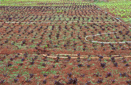 Converting agricultural land to grow vegetables in Thailand. Stock Photo