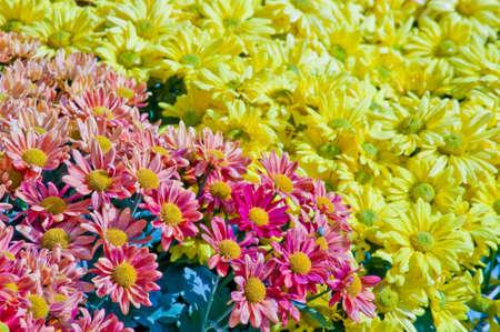 Background, beautiful and fresh flowers. Stock Photo