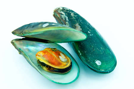 fresh mussel in Thailand isolated on white background Stock Photo