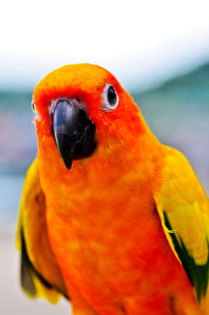 Colorful parrot in the near term. Stock Photo - 14754831