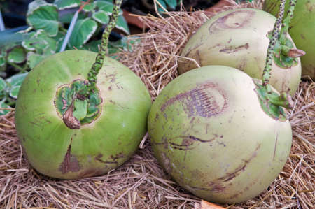 Three green coconut placed on straw.