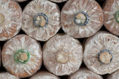 Ganoderma lucidum in the mushroom farm thailand