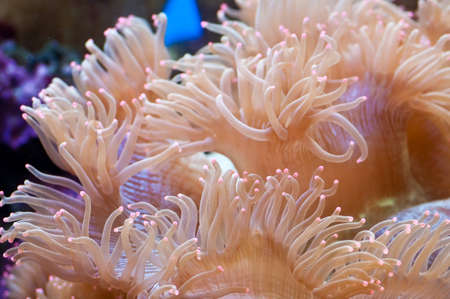 A close up of a painted anemone Stock Photo