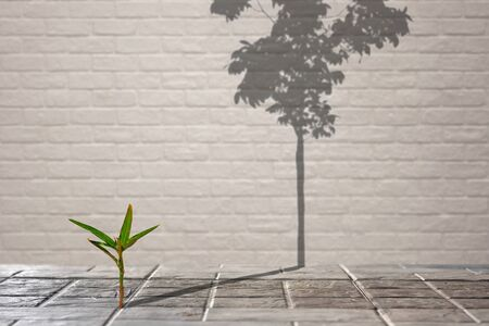 Focus on little green plant growing through from crack of pavement with long shadow of fully grown tree on surface of brick wall background, create idea of Life is a struggle and hopeful concept