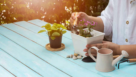 Side view of woman planting small houseplant into white plastic flower pot on blue wooden table in home gardening area
