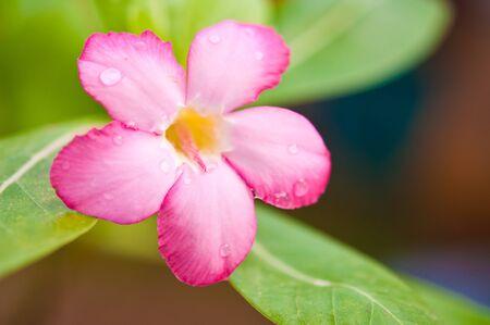beautiful rare: FLOWER PINK