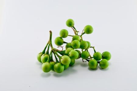 brinjal: Pea Eggplant in the garden