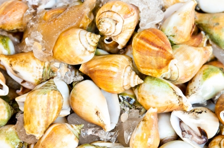 grape snail: Snails for sale in ice to be made​​.