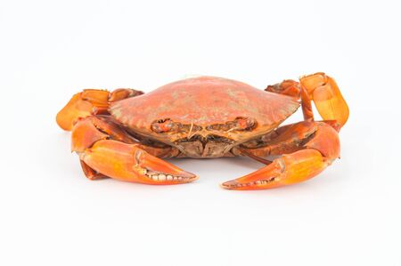 Steamed crabs for cooking. photo