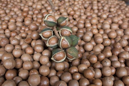pip: The background of dried cooked macadamia.