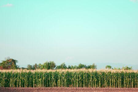 acreage: agricultur,Corn acreage is empty Stock Photo