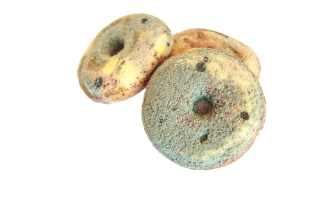 donut overgrown with fungus Stock Photo