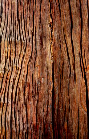 showcase: Wood background Showcase