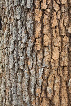 Close up der Baumrinde Textur und Rillen im Sommer