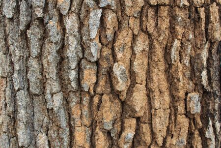 grooves: Close up of tree bark texture and grooves in summer
