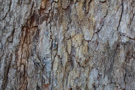 tamarindo: corteza de los árboles de tamarindo Foto de archivo
