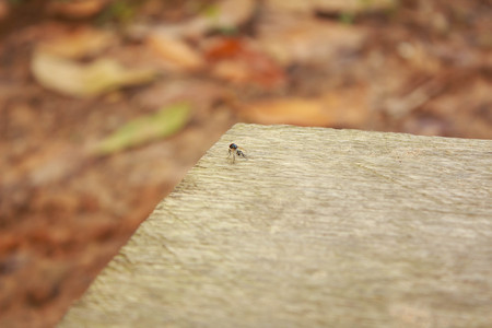 House fly on wood background