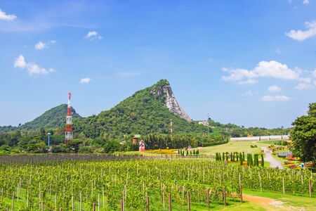 Grape farm and garden at near lake and mountain in day a bright sky and is popular tourist destination of Pattaya, Chonburi prefecture.