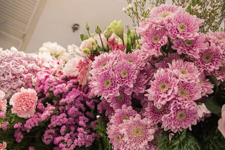 Beautiful pink chrysanthemum at decorated to celebrate the anniversary inside department store and shopping. Select focus. Standard-Bild